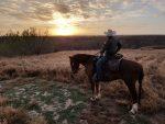 Фото ковбоя Техаса - полицейский рейнджер