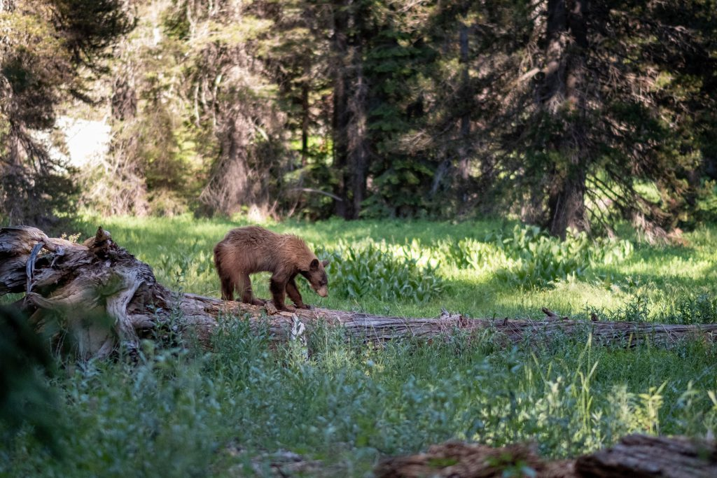 Фото медведя в лесу