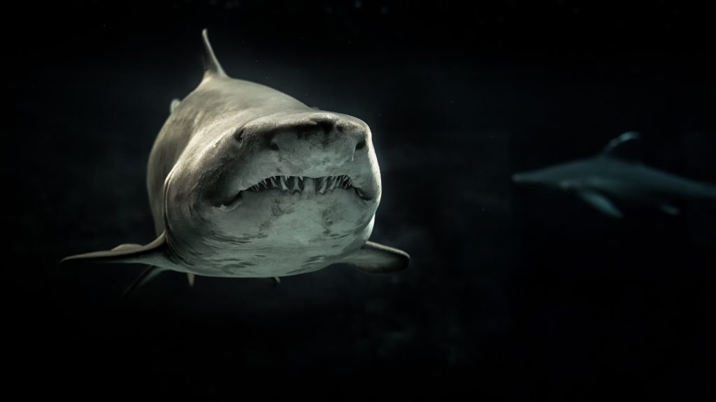 Большая белая акула в темноте