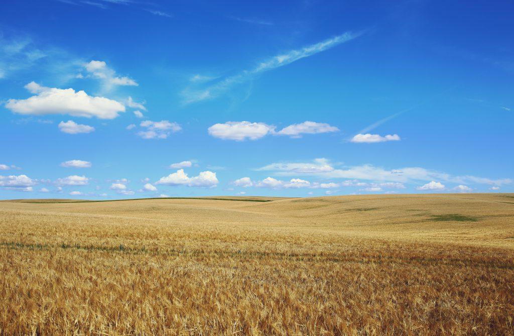 Фото голубого неба и желтого поля