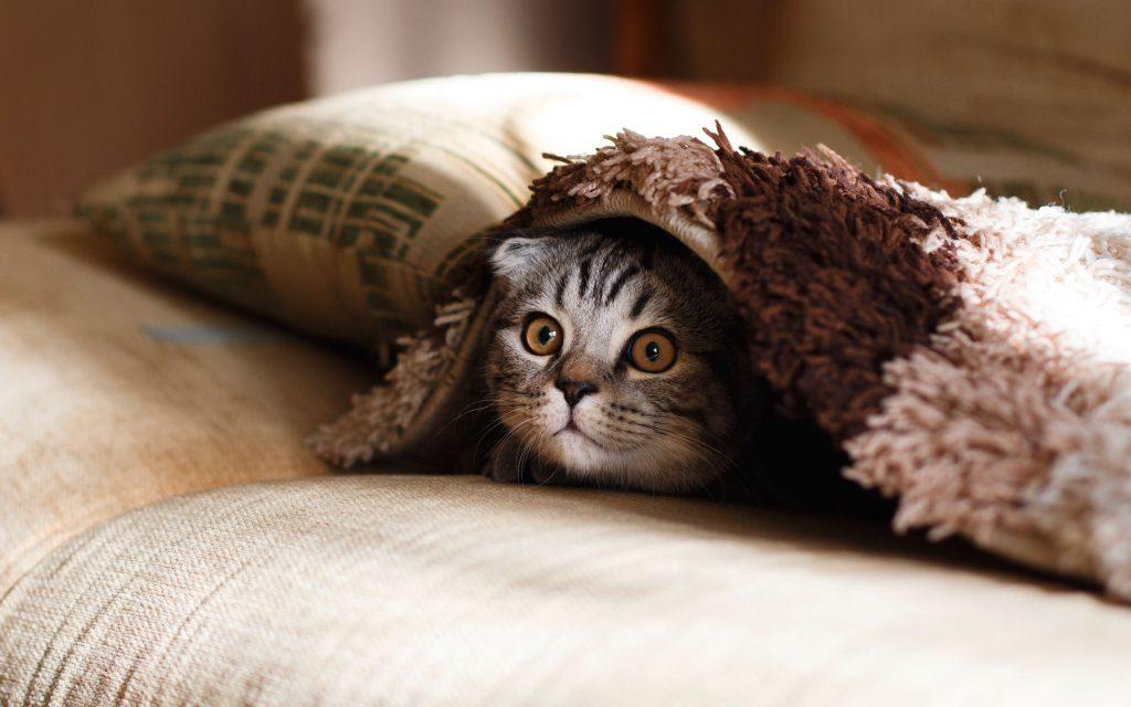 Маленький котенок прячется под одеялом