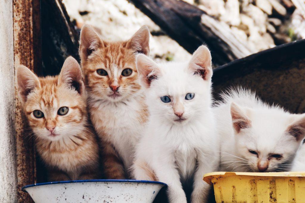 Миленькие маленькие котята фото