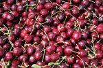 Свежие фрукты - красная черешня вишня