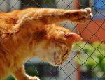 Милый рыжий котик фото