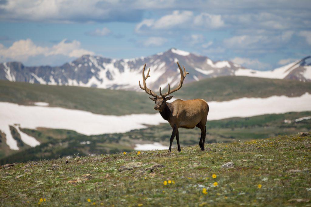 дикий горный олень в горах фото