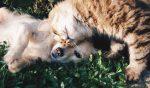 Дружба собаки и кота. Щенок и котик лежат вместе