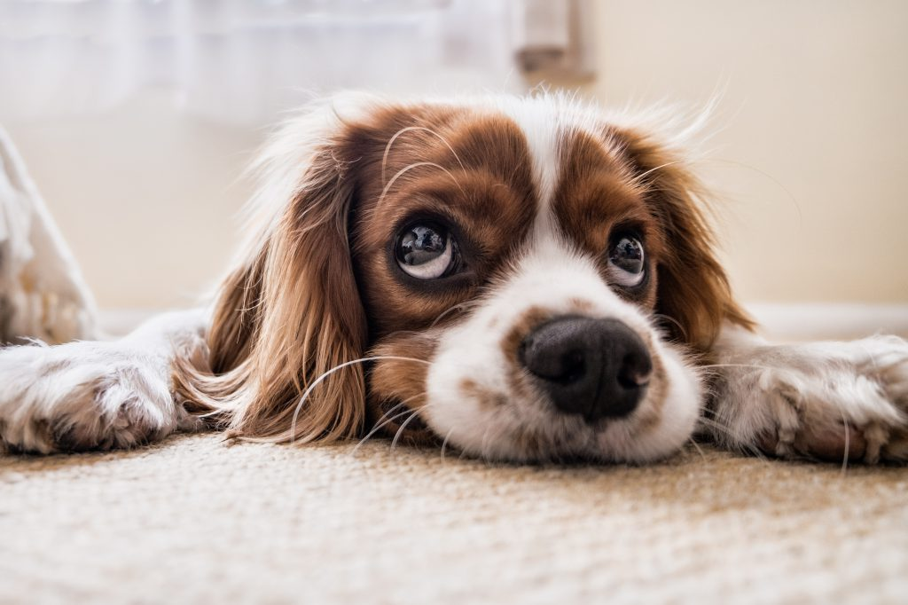Фото грустной печальной собаки