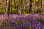 Сказочный лес фото
