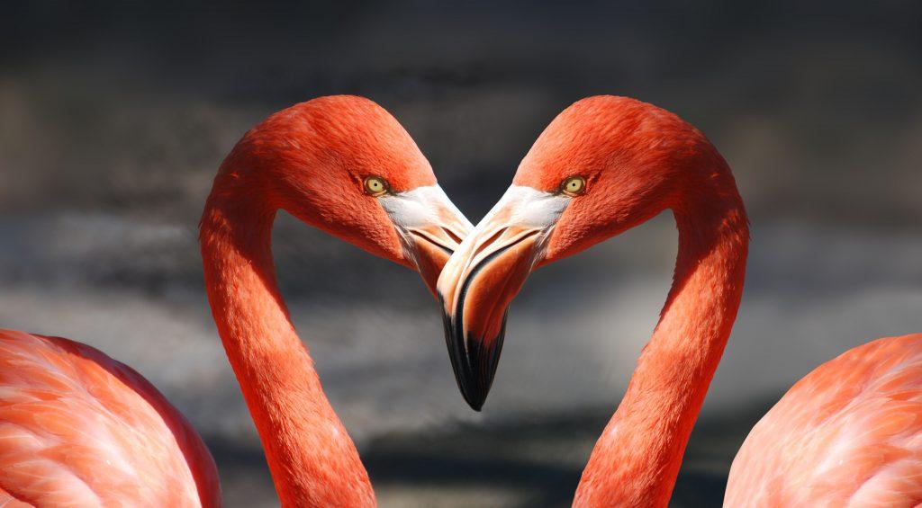 Открытка про любовь - две птицы фламинго и сердце, сердечко
