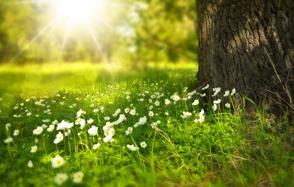 Красивое фото полевых цветов