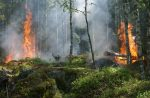 Дым огонь и лесной пожар - деревья в огне