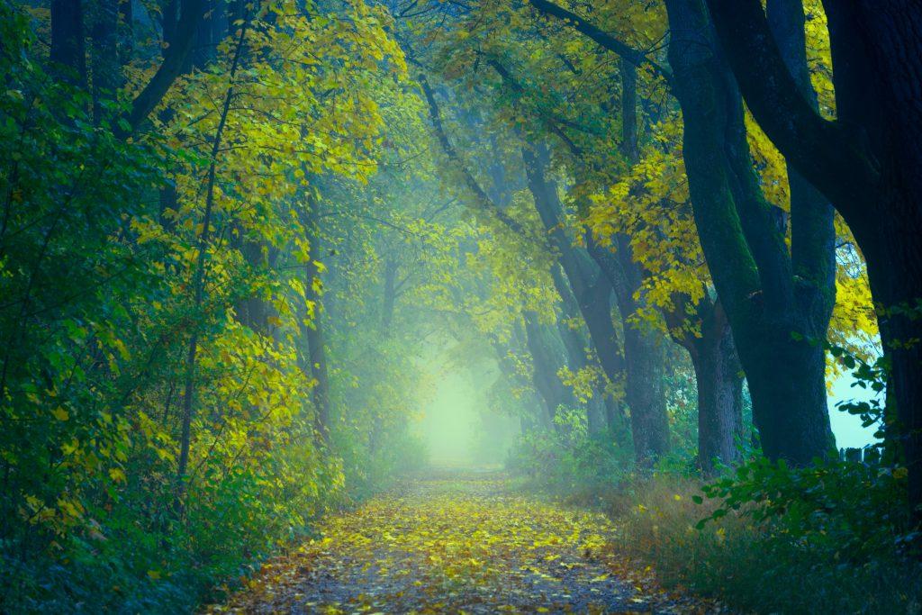 Таинственный осенний лес фото
