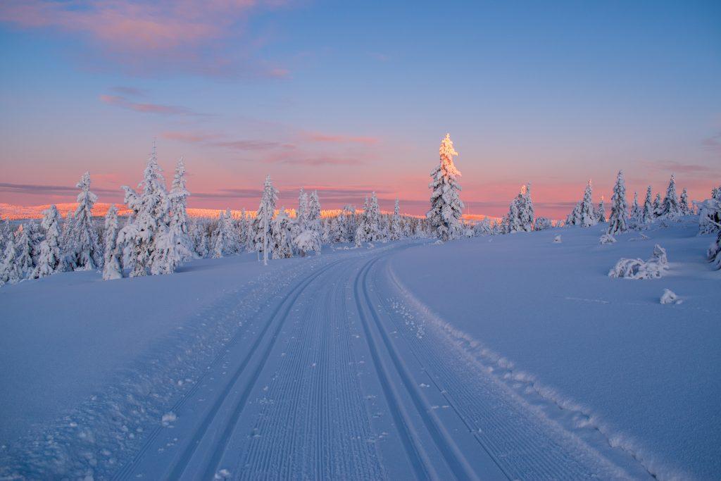 Заснеженная дорога, лес после снегопада