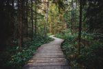 Старая деревянная дорога через густой лес. Бесплатное фото