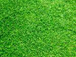 Текстура травы - зеленая трава и листики