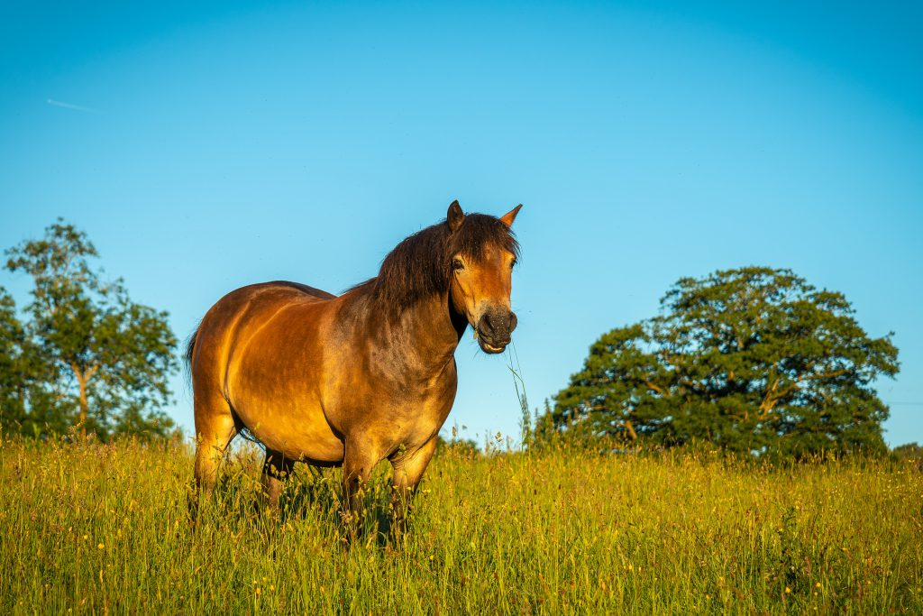 Красивое фото лошади среди поля