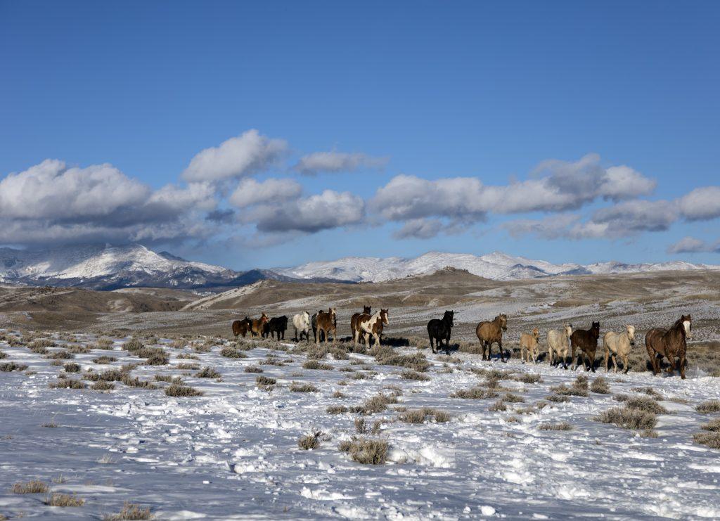 Лошади на американском ранчо фото
