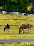 Лошади пасутся на пастбище фото