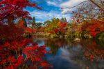 Сад парк в Киото Япония фото