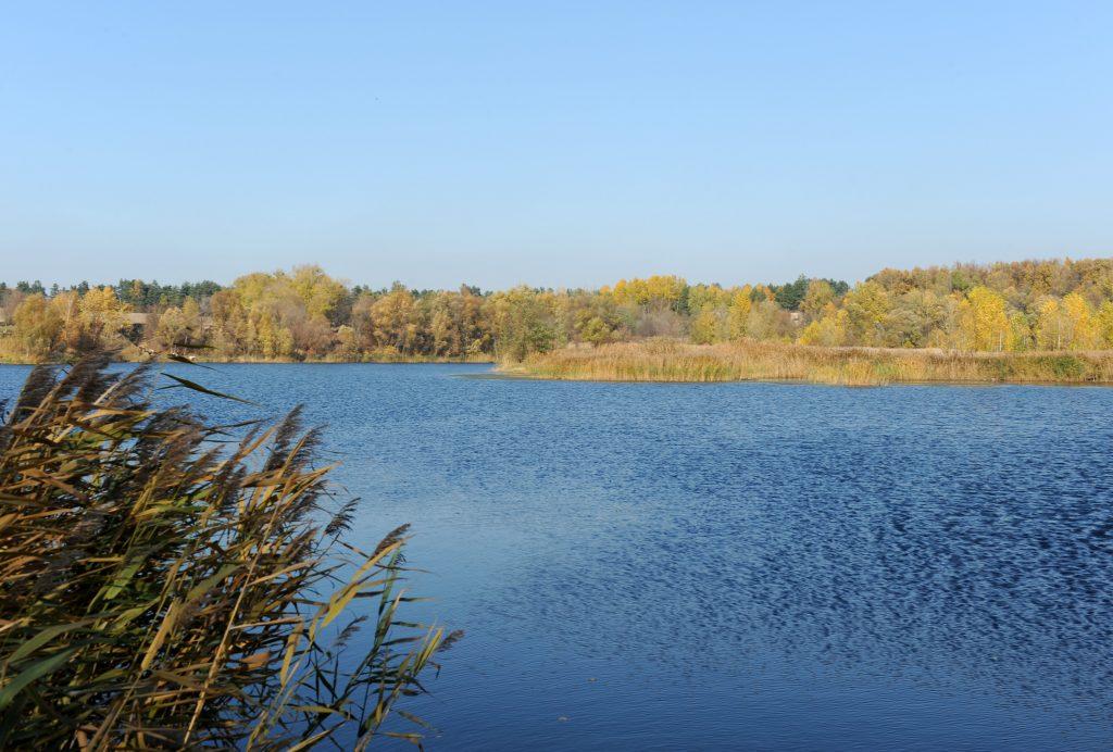 Камыши на реке, осенняя река или озеро осенью