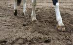 Копыта лошади, земля - крупный план