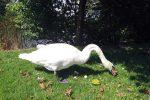 Фото белого лебедя в Межигорье