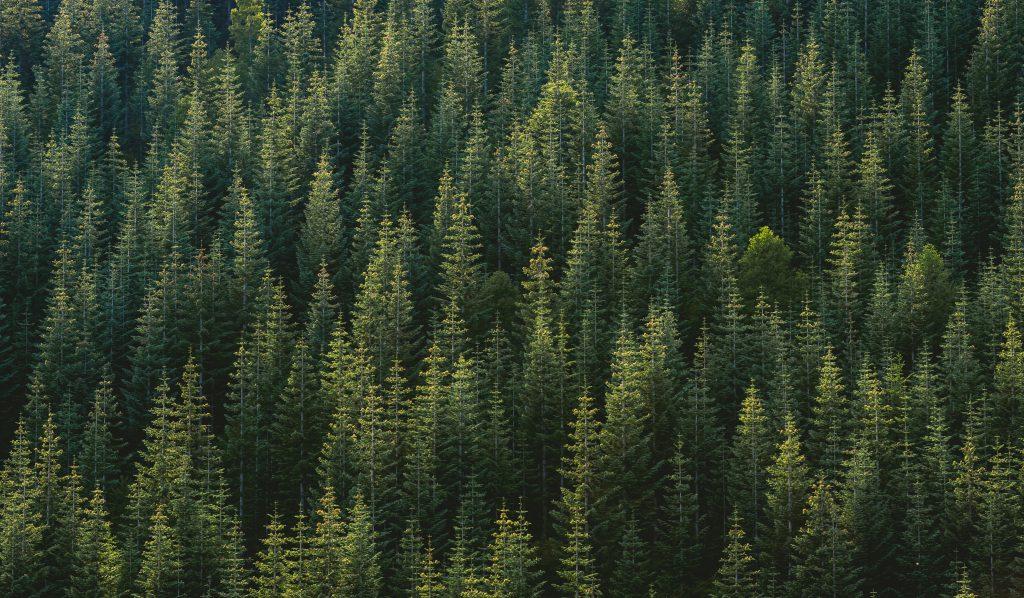 фото леса в хорошем качестве