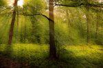 Солнечный луч в лесу фото