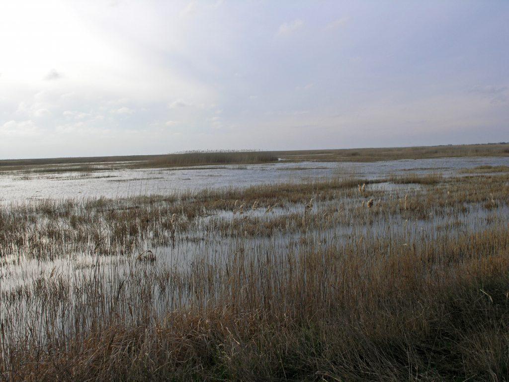 Лиман и заливные луга поля в Одесской области
