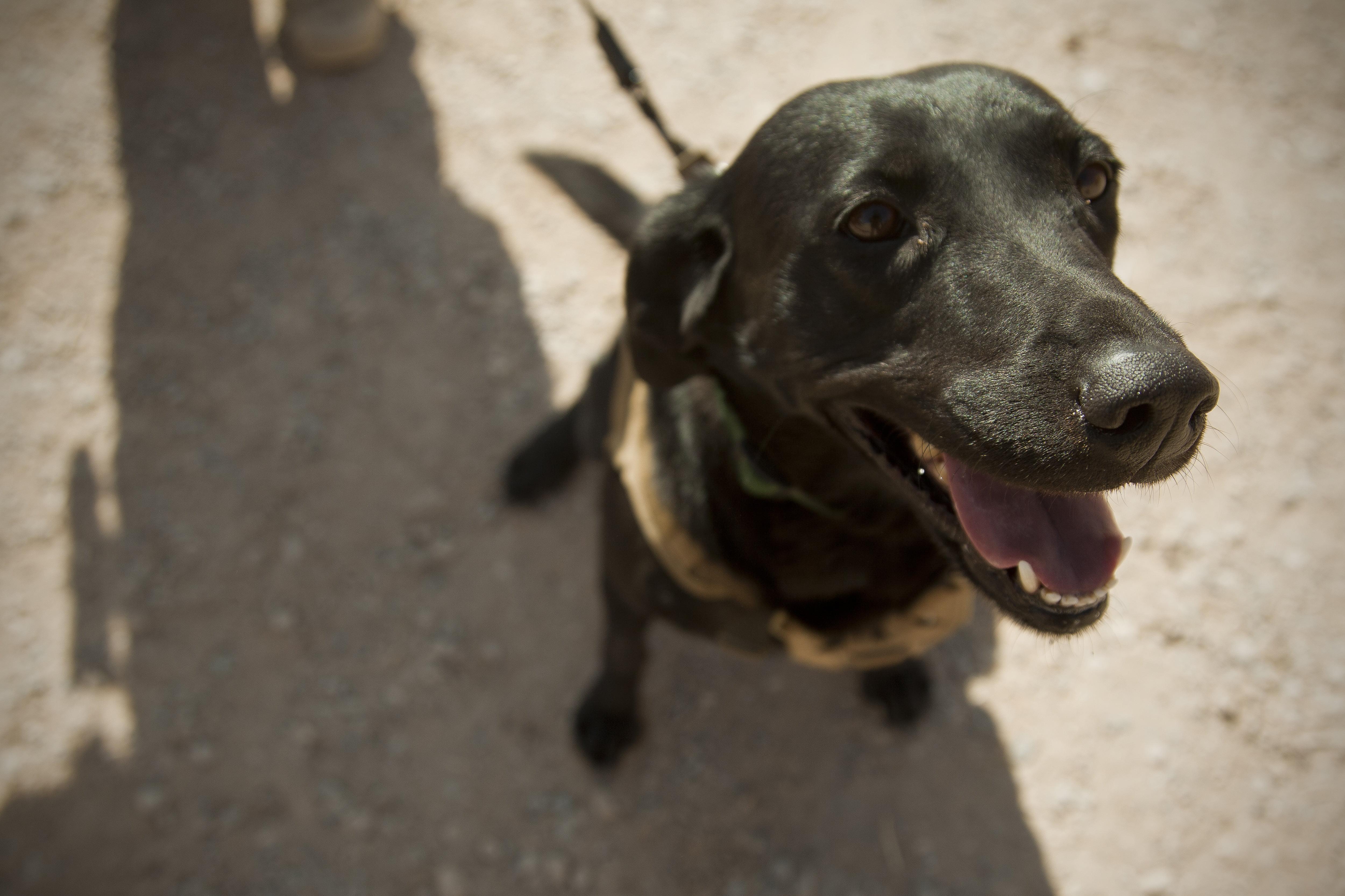 Собака на военной службе фото