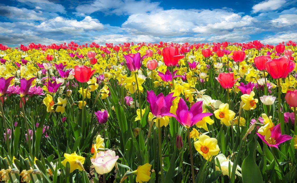 Полевые цветы нарциссы фото