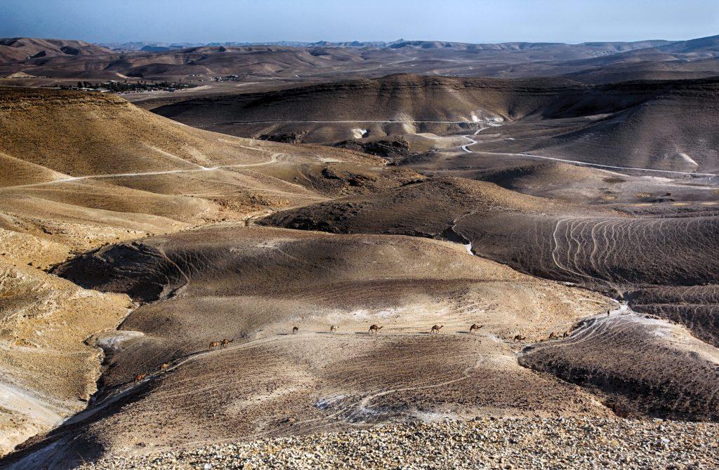 Израиль пустыня Негев фото