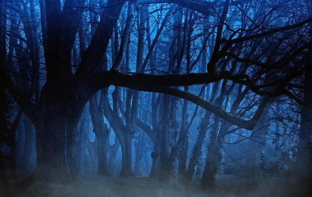 Фото леса ночью