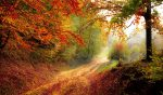 Красивый осенний лес фото