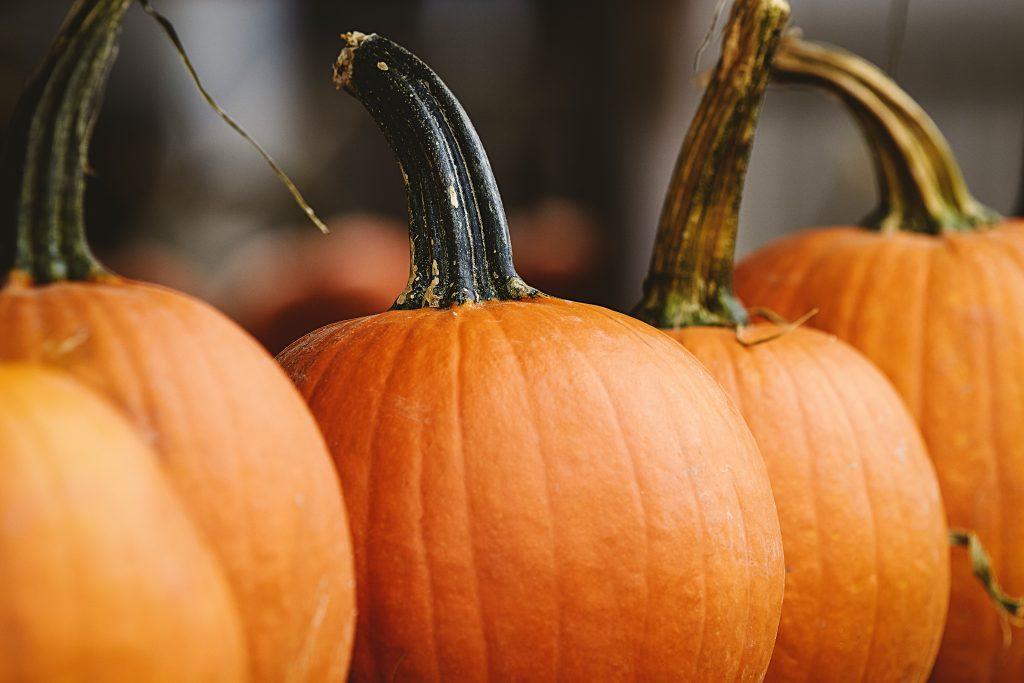 Растение Тыква, тыквы на праздник Хэллоуин