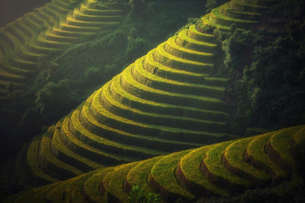 Рисовые террасы, Юго-Восточная Азия