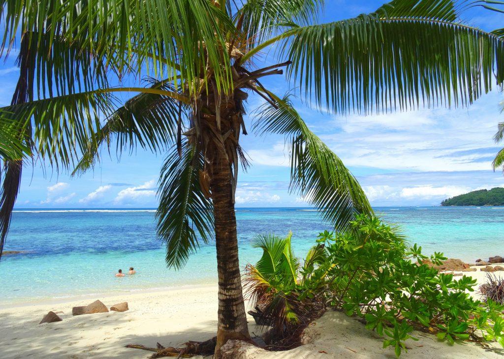 Сейшельские острова - пальма на пляже