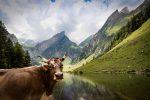 Район Швенде в Аппенцелль в Швейцарии