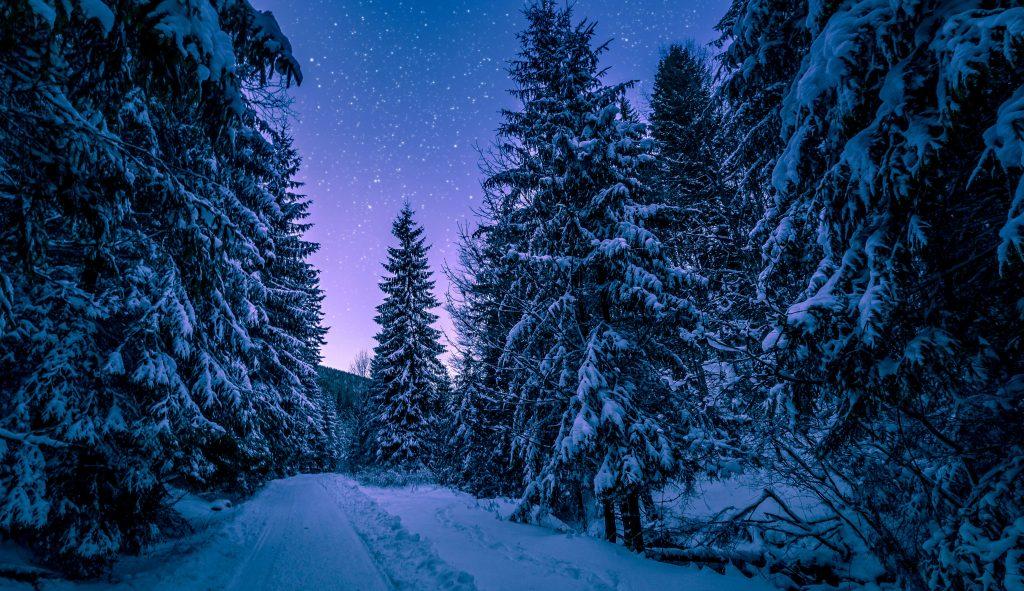 Сказочный ночной зимний лес фото