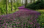 Цветущие цветы на поляне в лесу, поле цветов в парке