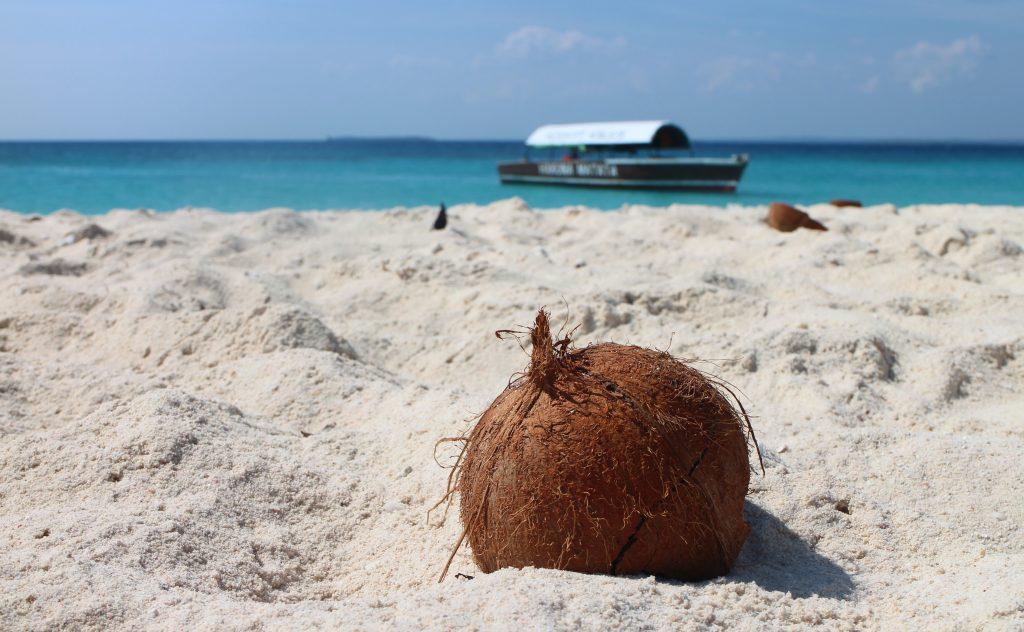Орех кокос на пляже, остров Занзибар