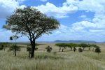 Танзания национальный парк Серенгети