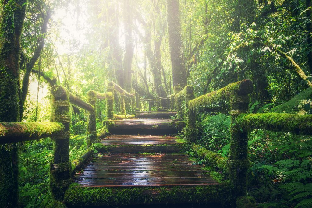 Тропический лес в Чиангмай, Таиланд