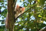 Маленький котенок на дереве фото