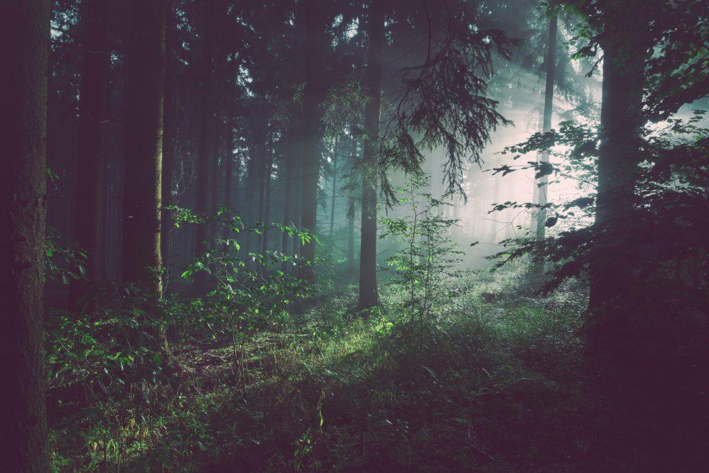 Стоковое фото густой дремучий лес