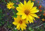 Макросъемка цветов - полевые желтые садовые цветы