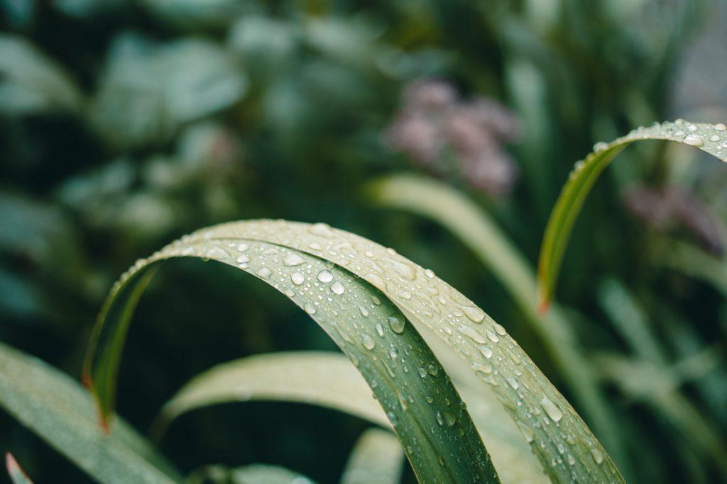 Капли росы воды на листьях травы
