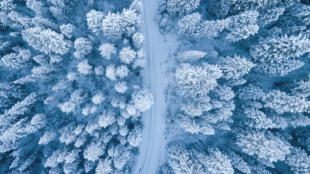 Панорама зимнего леса с воздуха
